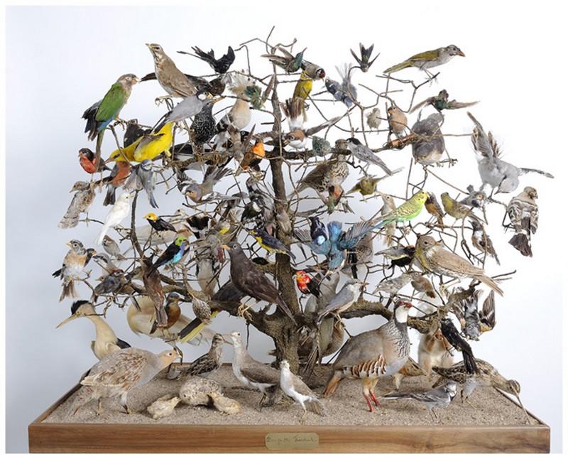 musee-denais-arbres-oiseaux-xixe-siecle-800-122502